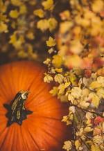 Есенна ваканция 2019